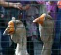 В Кремлёвском сквере открылась выставка птиц