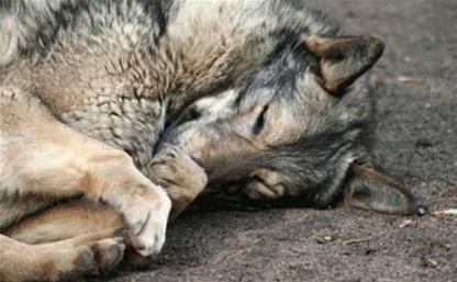 За жестокое обращение с животными будут наказывать с 14-летнего возраста
