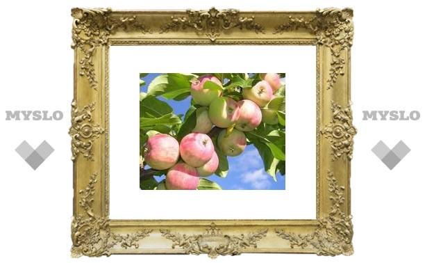 Толстовские яблочки