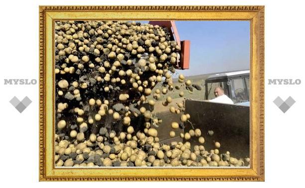 Урожайность зерна и картофеля в Туле снизилась вдвое