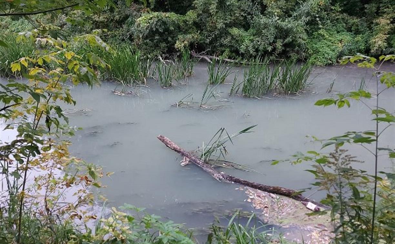«Белая мутная жижа»: тулячка рассказала о загрязнении реки Тулицы в черте города