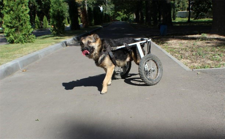 В Новомосковске у собаки-инвалида украли коляску