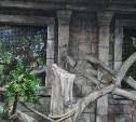 Сурикаты из Тульского экзотариума переехали в собственные апартаменты