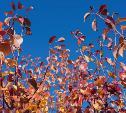 Погода в Туле 6 октября: ветрено и тепло