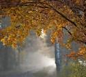Погода в Туле 18 октября: тепло, кратковременный дождь и ветер