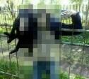 Суворовский самоубийца насадил собаку на острую ограду, а потом покончил с собой