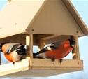Зеленое движение «ЭКА» призывает школьников помочь птицам