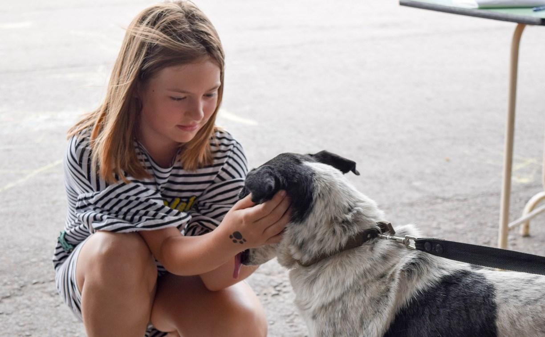 В тульском «Макси» прошел благотворительный фестиваль помощи животным