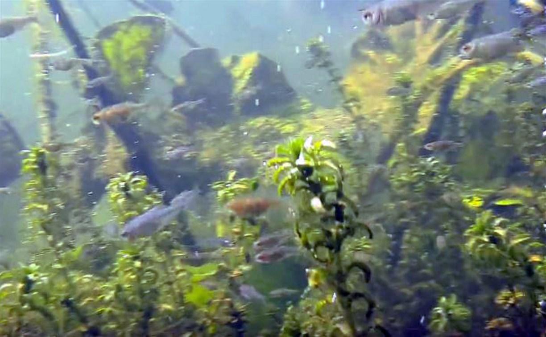 Окно в природу: туляк снял на видео подводный мир речки Солова