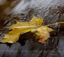 Погода в Туле 1 октября: дождь, сильный ветер и до +17