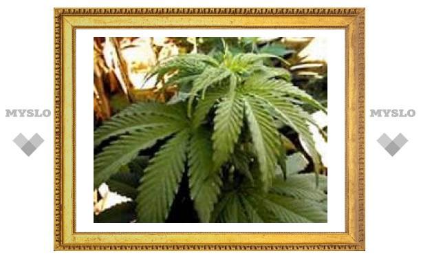 Врачам штата Нью-Мексико разрешили выписывать марихуану