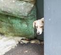 Жители Новомосковска: «На наших домашних собак ведут охоту!»