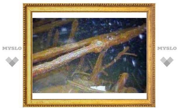 У берега Крыма найден византийский корабль