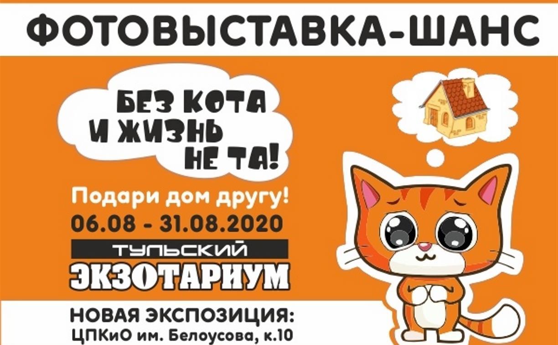 В Тульском экзотариуме откроется «кошачья» фотовыставка