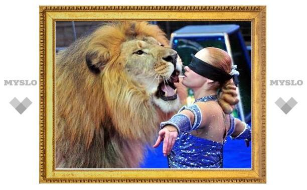 В Тульский цирк привезли гигантских львов