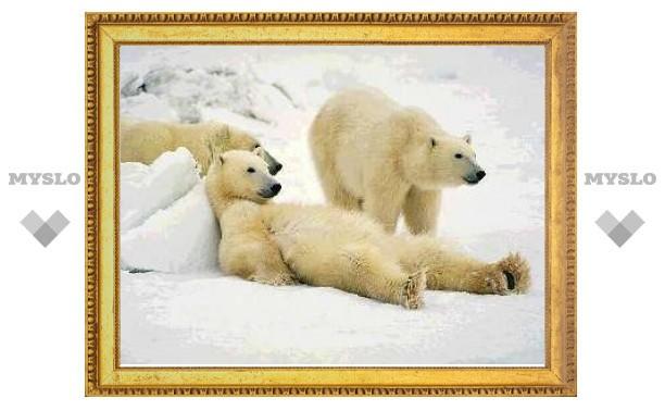 Бурые медведи побелели за 45 тысяч лет