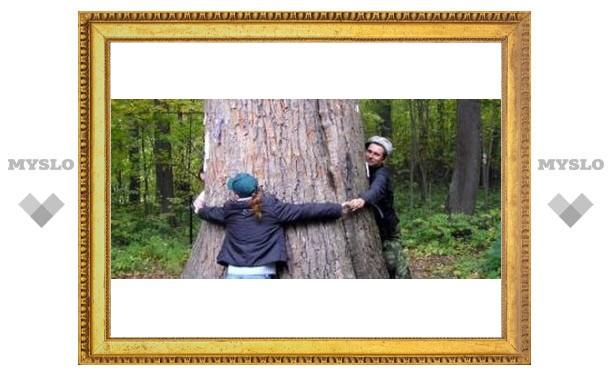 Под Тулой уничтожили древнее дерево