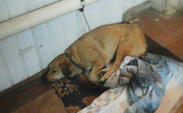В центре помощи животным «Любимец» замерзают собаки и кошки