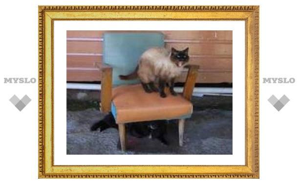 Покусанный котом американец отсудил у сестры 122400 долларов
