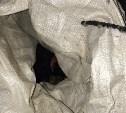 Мешок с «расчленёнкой» на ул. Вересаева в Туле: внутри оказалась не собака