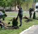 Жители Новомосковска высадили более 200 деревьев
