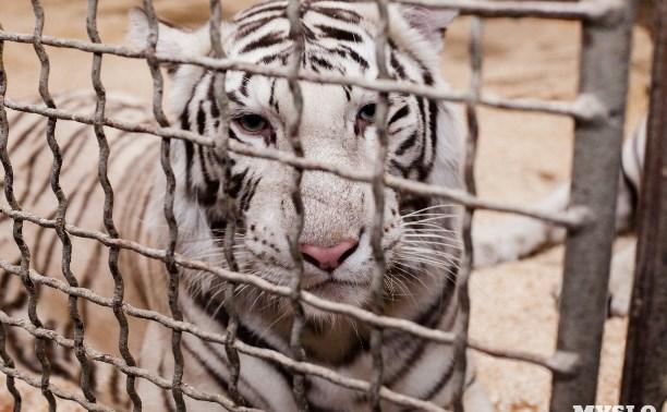 В Туле проведут акцию «За цирк без животных!»