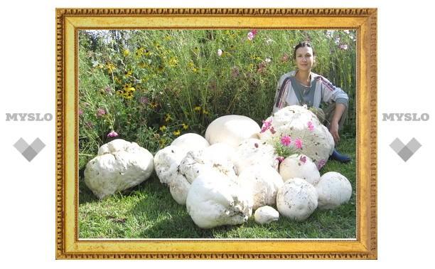 На тульских дачников напали грибы