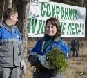 Туляки посадили 8 гектаров соснового леса