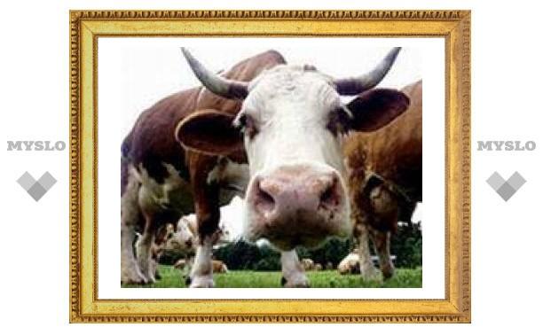 Британцев предупредили о возвращении коровьего бешенства