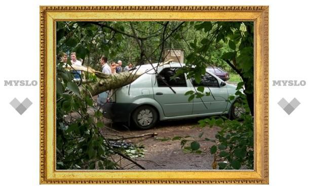 В Туле ветер повалил 32 дерева