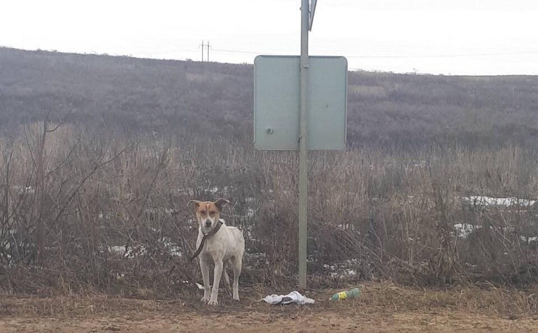 В Туле собака сутки ждала у дороги бросившего ее хозяина