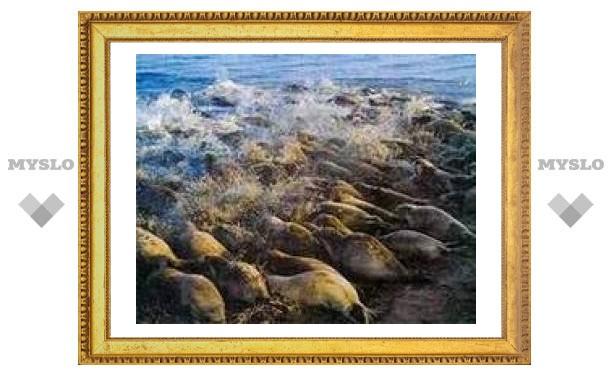 Теплая погода привела к массовой гибели тюленей в Каспийском море
