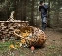 В лесах Тульской области за три дня заблудились 16 человек