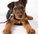 В Санкт-Петербурге ввели налог на домашних животных