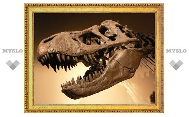 Австралия обзавелась собственным миниатюрным тираннозавром