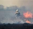 Сразу в нескольких районах Тульской области загорелись поля
