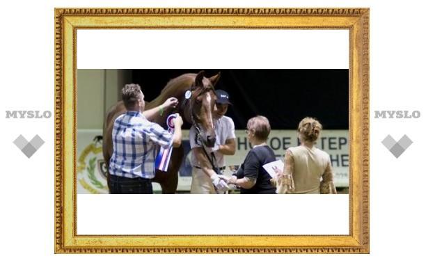 Тульский конь стал лучшим в России