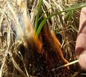В Туле ежедневно фиксируют от 4 до 8 случаев пала сухой травы