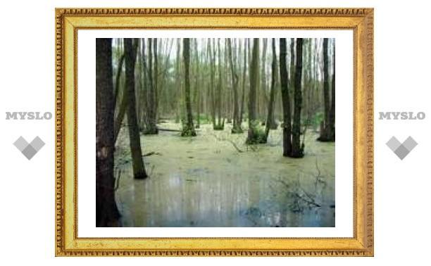 2 февраля: Всемирный день водно-болотных угодий