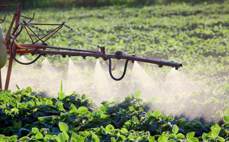 Сельхозпредприятие чуть не отравило насаждения щекинского фермера пестицидами
