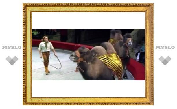 В Туле прошла премьера циркового шоу