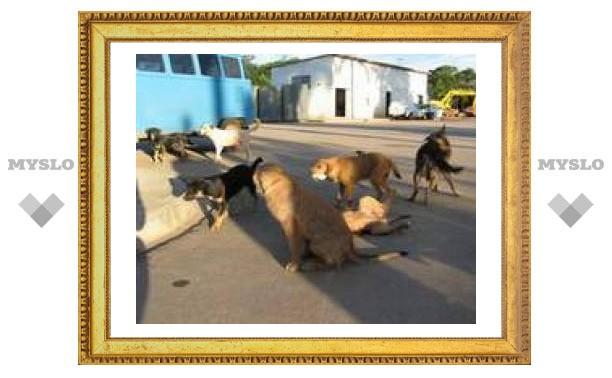 В Туле продолжается борьба с бродячими собаками