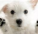 В Туле пройдет благотворительная акция в рамках Всемирного дня охраны животных