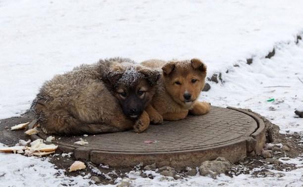 Отловом животных в Туле вновь займется «Континент +»