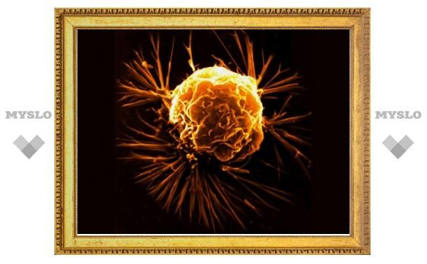 """Австралийцы вылечили рак лекарствами в """"обертке"""" из мембраны бактерий"""