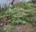 Полицейские обнаружили у туляка 11 мешков с растением, похожим на коноплю