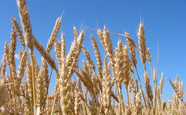 Большую часть областного бюджета пустят на поддержку сельского хозяйства