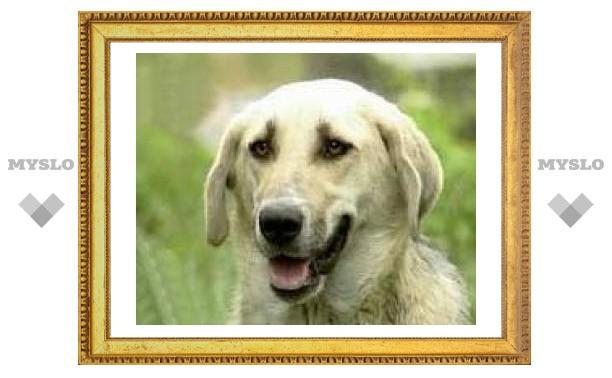 В одном из украинских монастырей живет собака, подпевающая церковному звону