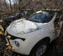 Туляк отсудил у администрации города 133 тысячи на ремонт поврежденного упавшей веткой автомобиля