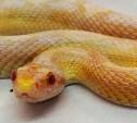 В Туле в обувном магазине обнаружили змею